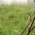 Udane Wakacje, byłem w swoim żywiole :) #burza #deszcz #ksiezyc #księżyc #lato #pajęczyna #pejeczyna #slonce #słońce #wiosna