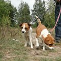 Do adopcji #adopcja #Gliwice #pies #poszukuję #psy #suka #szukam #zwierzęta
