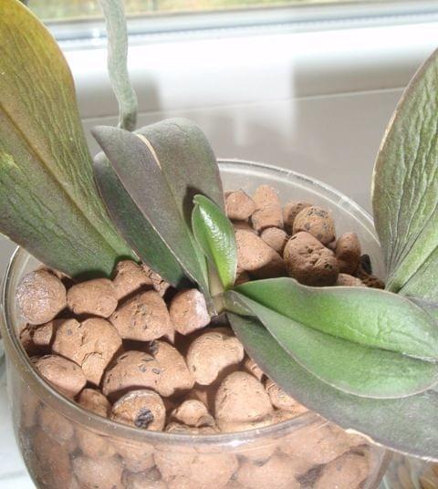 Uprawa wazonowa w keramzycie - Page 2 F59479603fbae36f