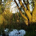 #staw #woda #wierzba #natura #wiosna