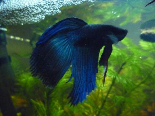 Ryby i rośliny w mioim akwarium #akwaria #RoślinyAkwarystyczne #ryby #rośliny