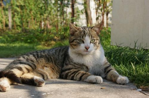 #zwierzęta #kot