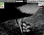 http://images39.fotosik.pl/121/01ad76d6d8be3e31m.jpg