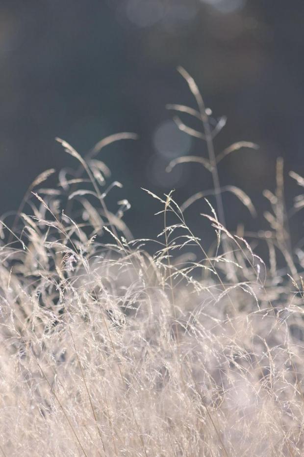 światłem malowane #światło #trawa