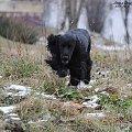 Świrek. #boisko #Luna #łąka #pies #śnieg #zima