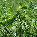 przyroda rosliny owad kwiat wiosna #roślina #motyl #robak #owad #pokrzywa #przyroda #wiosna