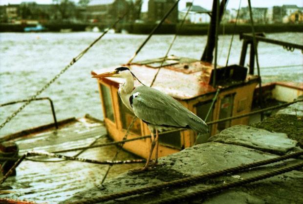 Old Port #Galway #Irlandia #Port #Ocean #xpro #CanonEos50e #lomo