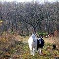 #UroczyskoKepa #Mazowsze #agroturystyka #rolnictwo #ekologia #kozy