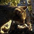 #Kot #jajko #drapieżnik