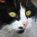 oczka.. #kot #oczy #portret