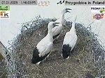 http://images39.fotosik.pl/151/66d1b05fd937629em.jpg