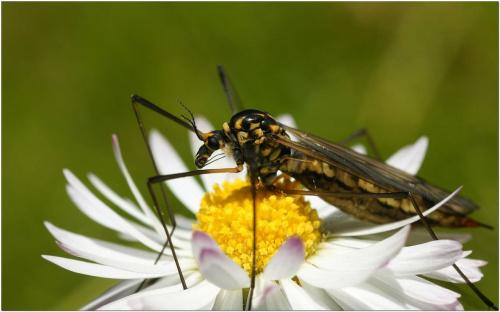 Jakis robal #Makro #kwiaty #owady