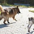 Moja trzoda #cycki #pies #zwierzęta