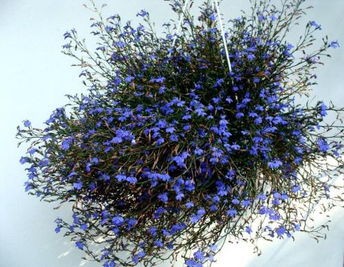 http://images39.fotosik.pl/1648/a89c159c30d2c03fmed.jpg