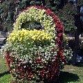 Limanowa #limanowa #kosz #kwiaty