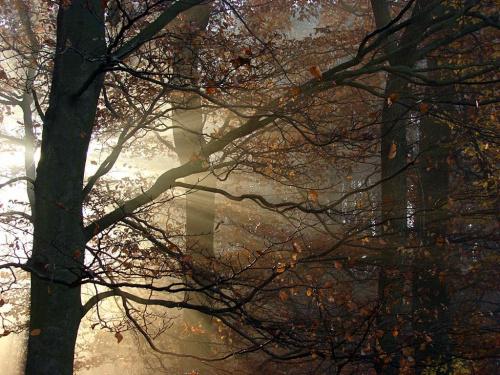 #las #drzewa #rośliny #przyroda #natura #jesień #mgła #słońce #liście #promienie