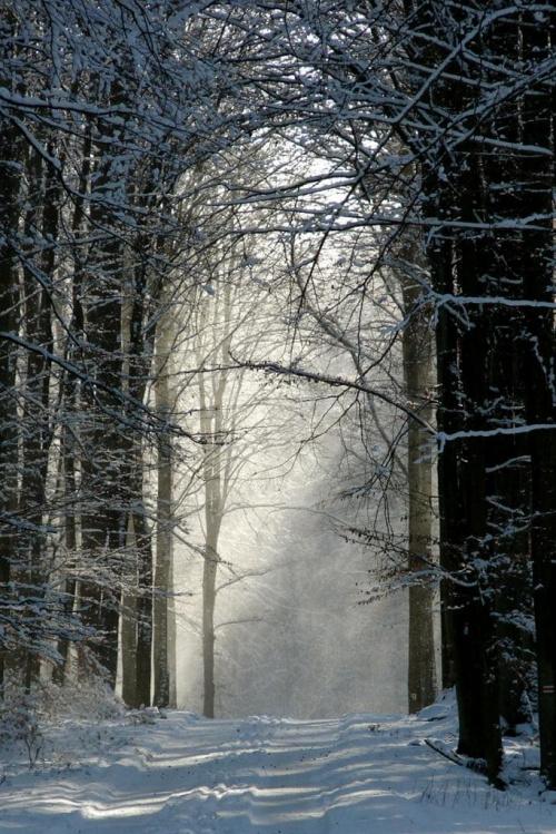 #las #drzewa #rośliny #przyroda #natura #zima #słońce #promienie #śnieg #brama #gotyk