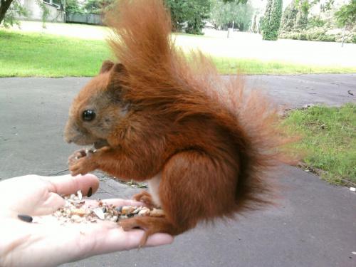 na trampolinie ;-) #wiewiórki