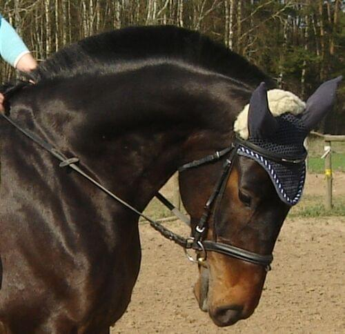 Końskie Fryzury Przerywanie Czy Podcinanie