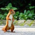 POZDRAWIAM:) #wiewiórka