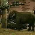#zwierzę