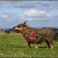 #pies #wiatr #smuga
