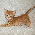 Koty do adopcji #adopcja #adopcje #Gliwice #kocięta #kot #kotki #koty #pomoc #przygarnę #schronisko #zaadoptuję #zwierzęta