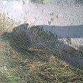 #cień #dajana912