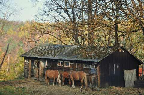 Konie jesienną porą... #jesień #konie