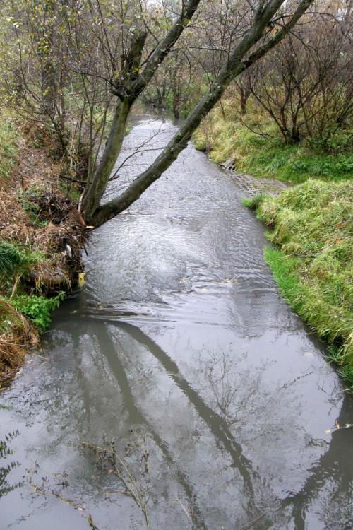 #rzeka #strumień #strumyk