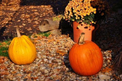 Owoce jesieni #jesień #OwoceJesieni