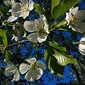 Wiosna '09 #wiosna #kwiaty #artystyczne