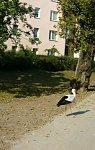 http://images39.fotosik.pl/196/1716d777088c2051m.jpg