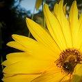 natura #natura #przyroda #rośliny #liść #owady