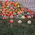 kolorowe dynie ;D #owoce #dynie #gospodarstwo
