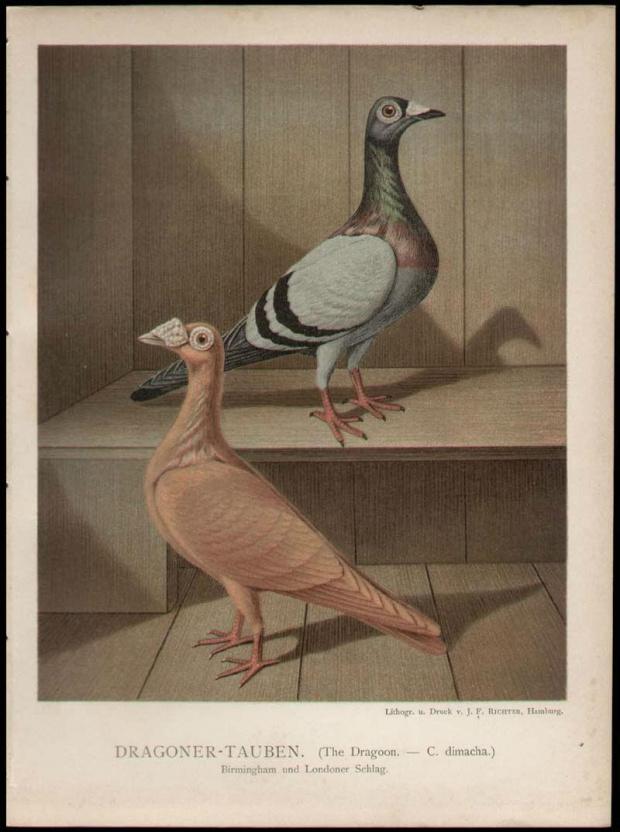 Dragony 1887 r.