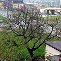 2 maja 2013 #Lipa #wegetacja #zima #wiosna #PoryRoku