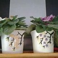 #rośliny #egzotyka #hobby #forum