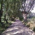 #Drzewa #wierzby