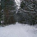 Las kabacki na biało #Warszawa #LasKabacki #zima #śnieg #las #biel #drzewa