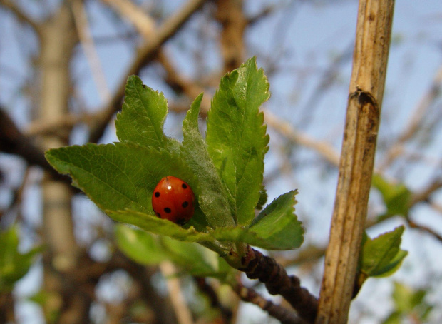 #owady #biedronka #wiosna