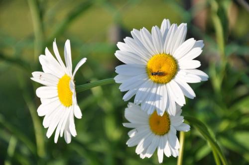 #kwiaty #przyroda #rośliny #ogród