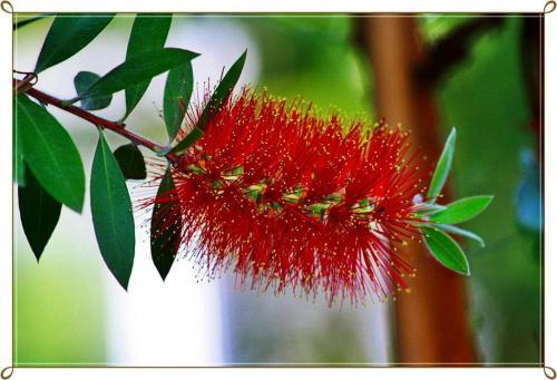 Egzotyk ! #kwiatek #palmiarnia #egzotyk