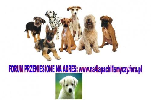 Forum Pies jest szóstym zmysłem człowieka  Strona Główna