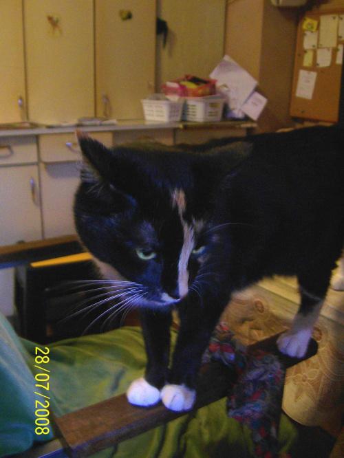 Kreska, zaprzyjazniona koteczka (na przechowaniu w lecie)
