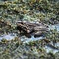 #żabka #ŻabyZwierzęta #psy #pieski