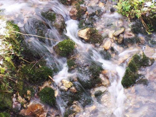 Górski potok #zakopane #tatry #GrzmotyMickiewicza #góry #potok #woda