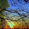 Świat jest piękny #ZachódSłońca #zachód #zachody #drzewa #niebo #grudzień #słońce