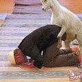 #modlitwa #koza #seks #zoofilia #zoofil #zaskoczenie
