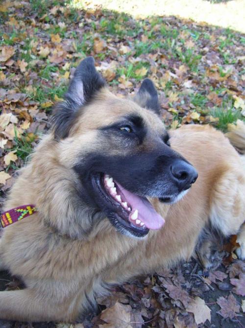 Uśmiech Sonara #Pies #sonar #uśmiech